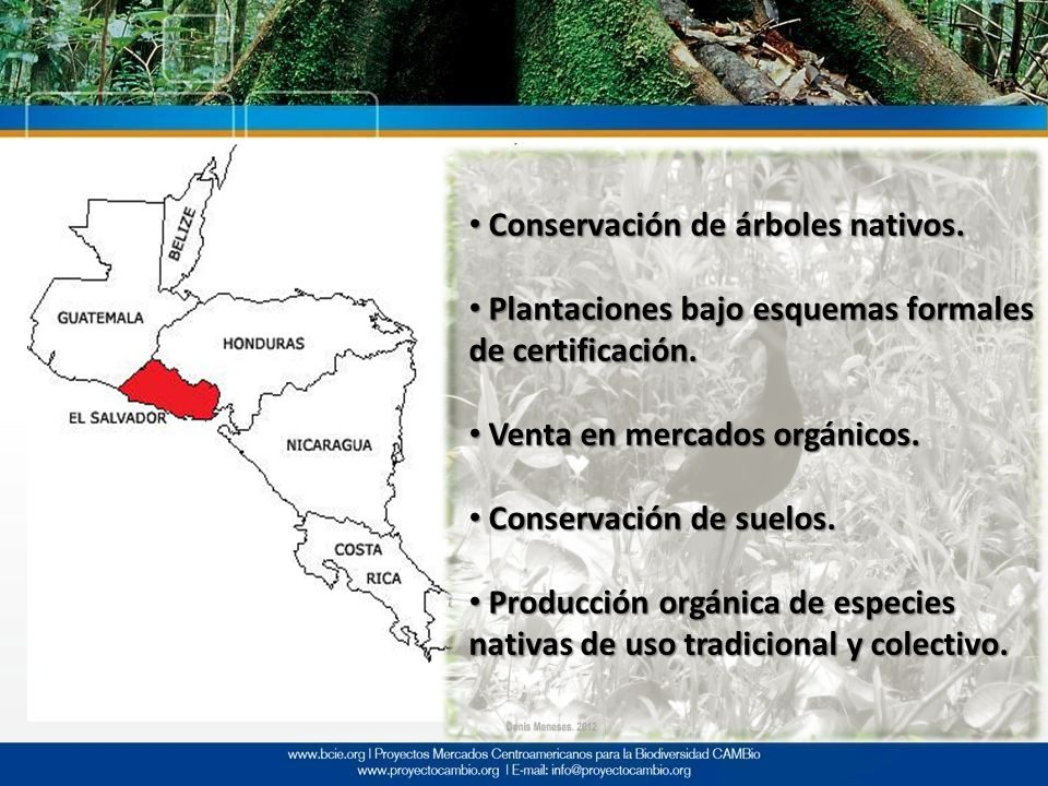 Conservación de árboles nativos.