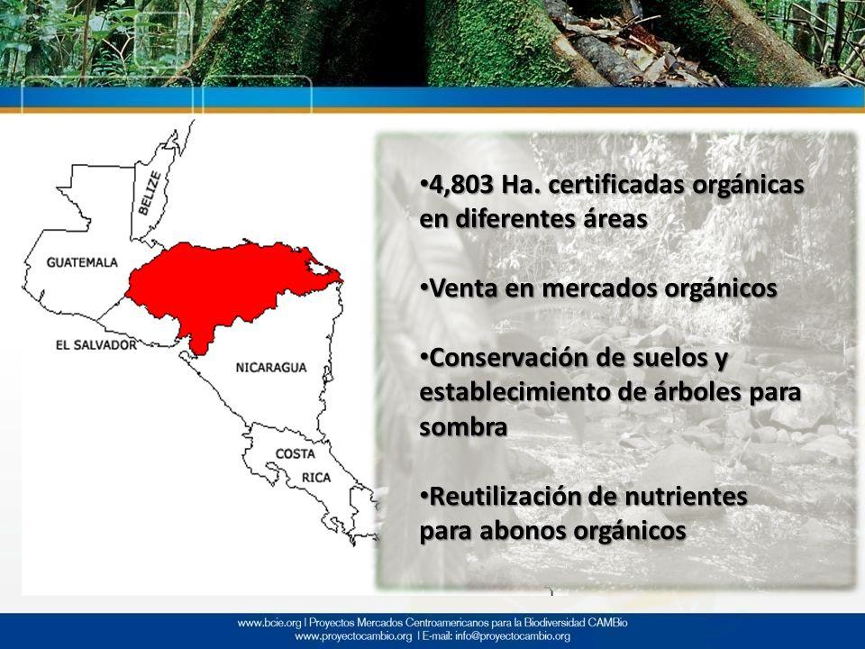 4,803 Ha. certificadas orgánicas en diferentes áreas