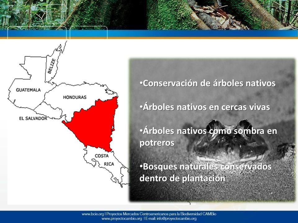 Conservación de árboles nativos