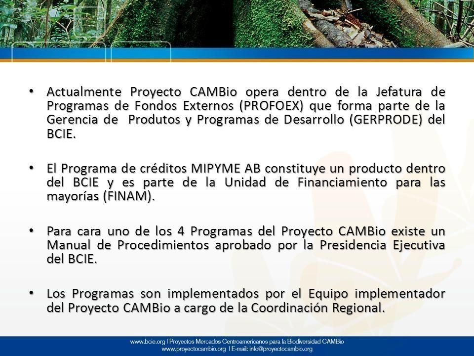 Actualmente Proyecto CAMBio opera dentro de la Jefatura de Programas de Fondos Externos (PROFOEX) que forma parte de la Gerencia de Produtos y Programas de Desarrollo (GERPRODE) del BCIE.