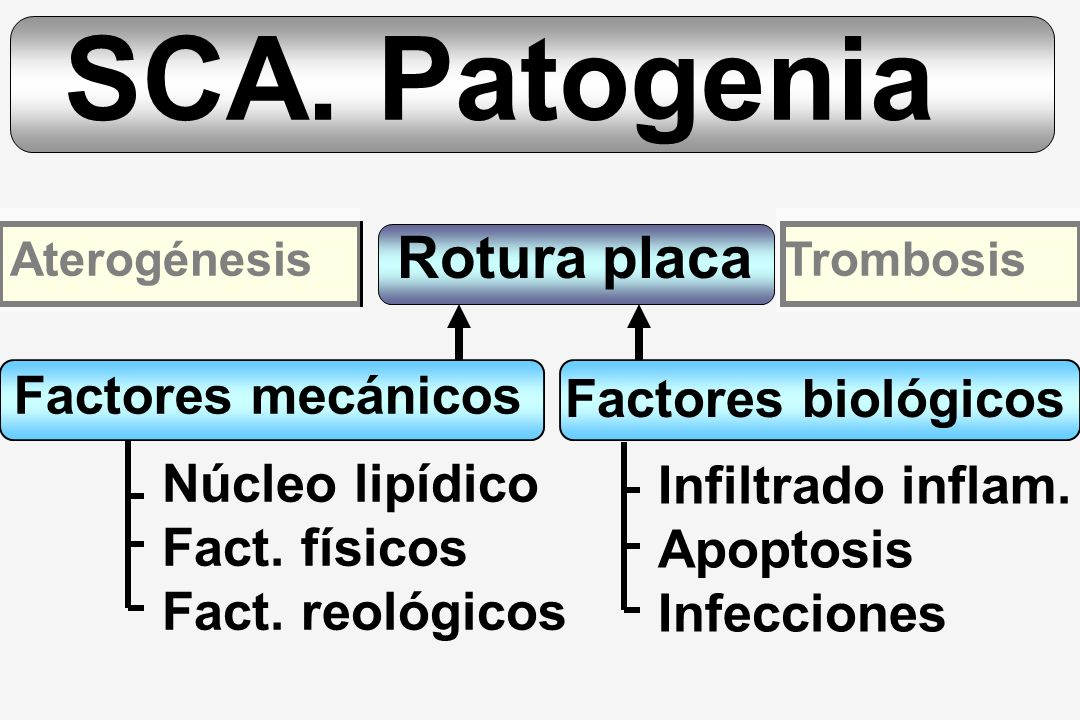 SCA. Patogenia Rotura placa Factores mecánicos Factores biológicos