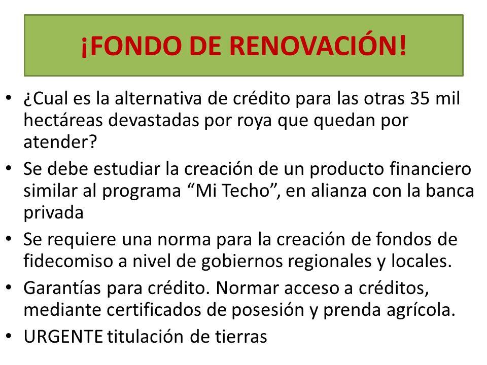 ¡FONDO DE RENOVACIÓN! ¿Cual es la alternativa de crédito para las otras 35 mil hectáreas devastadas por roya que quedan por atender