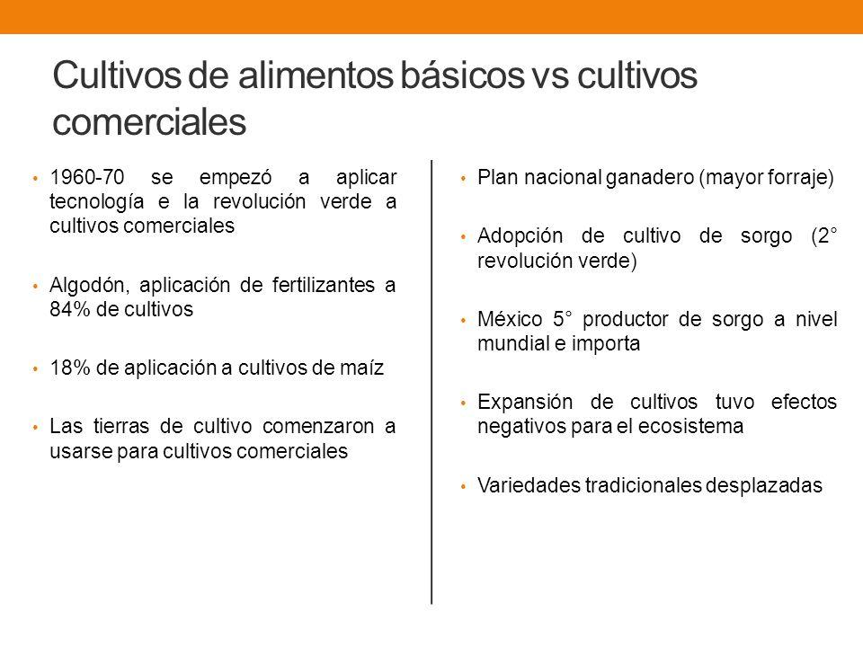 Cultivos de alimentos básicos vs cultivos comerciales
