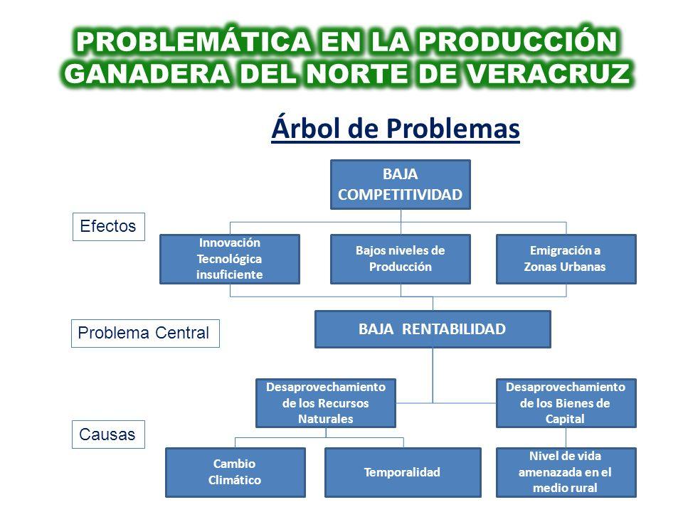 PROBLEMÁTICA EN LA PRODUCCIÓN GANADERA DEL NORTE DE VERACRUZ