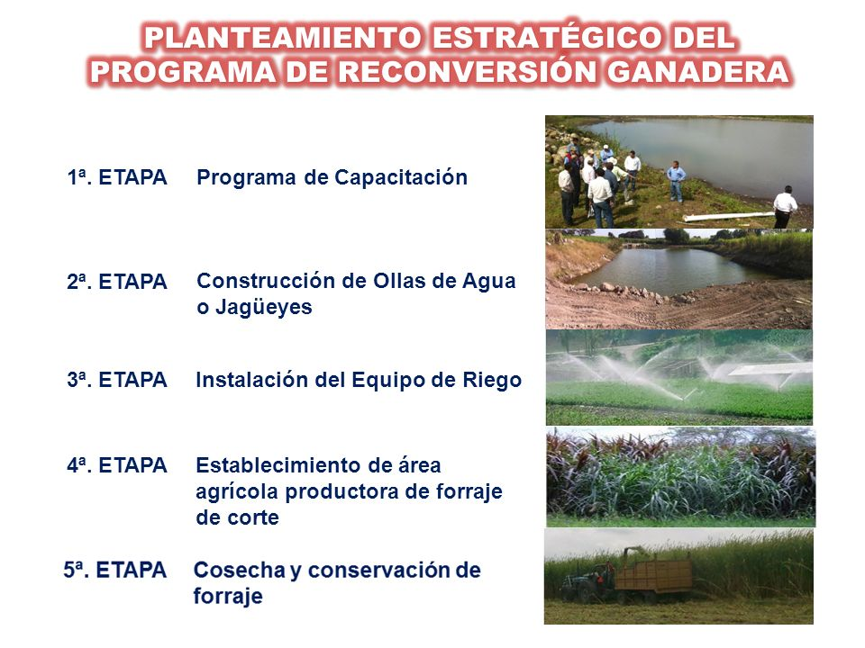 PLANTEAMIENTO ESTRATÉGICO DEL PROGRAMA DE RECONVERSIÓN GANADERA