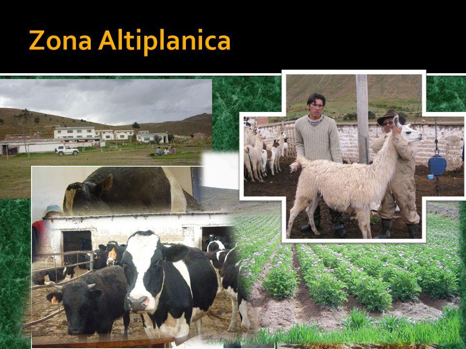Zona Altiplanica