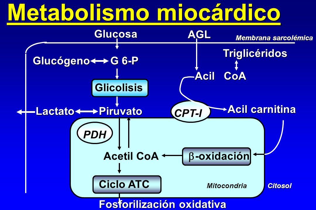 Metabolismo miocárdico