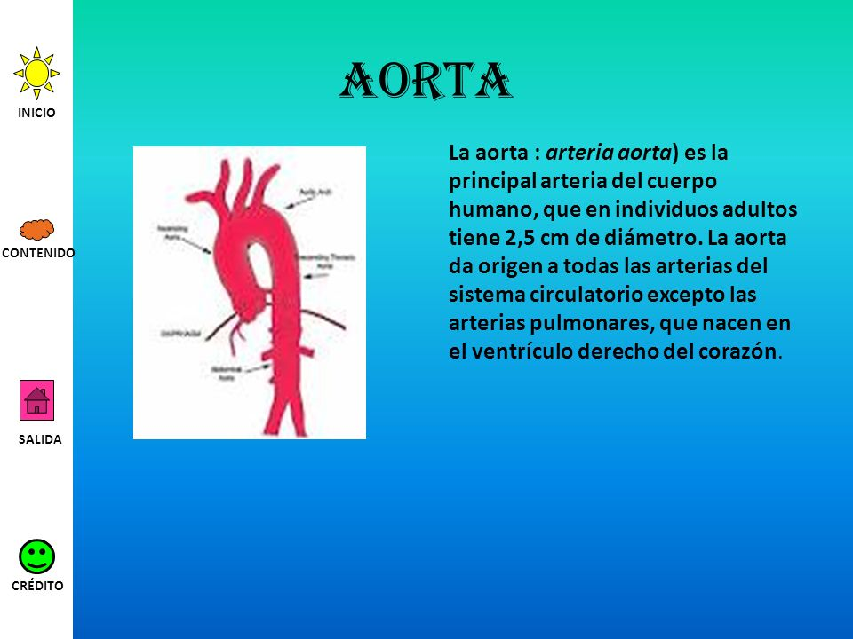 aorta INICIO.
