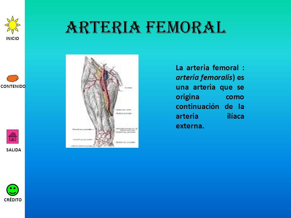 Arteria femoral INICIO. La arteria femoral : arteria femoralis) es una arteria que se origina como continuación de la arteria ilíaca externa.