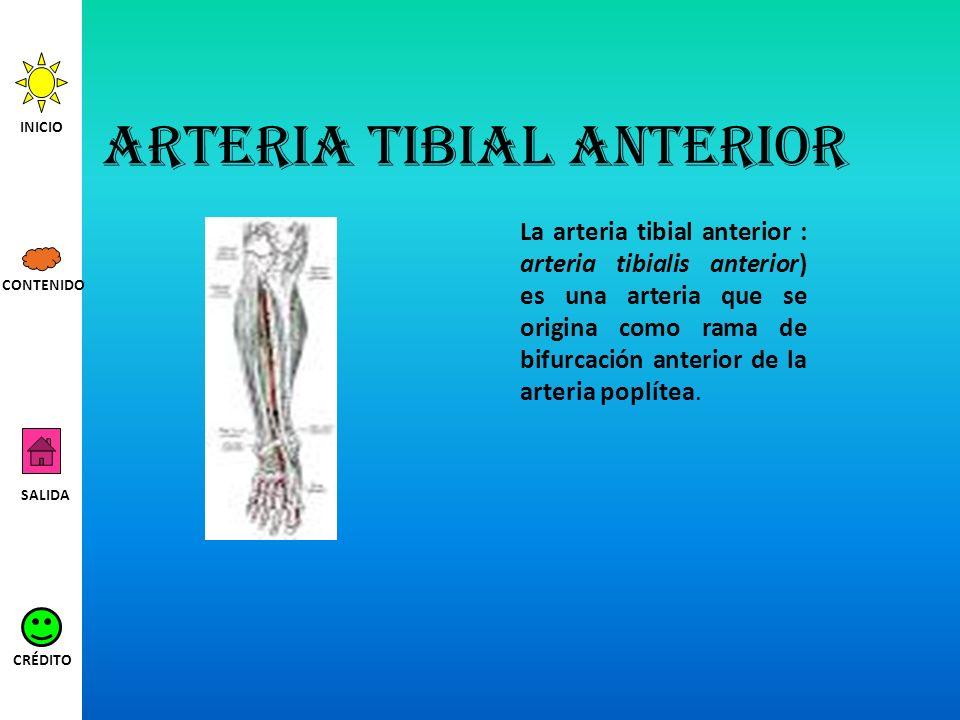 Arteria tibial anterior