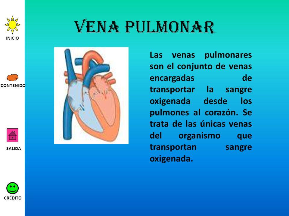 Vena pulmonar INICIO.