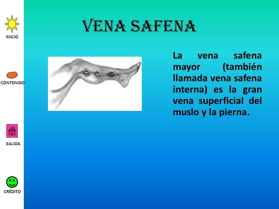 Vena safena INICIO. La vena safena mayor (también llamada vena safena interna) es la gran vena superficial del muslo y la pierna.
