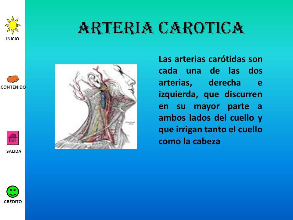 Arteria carotica INICIO.