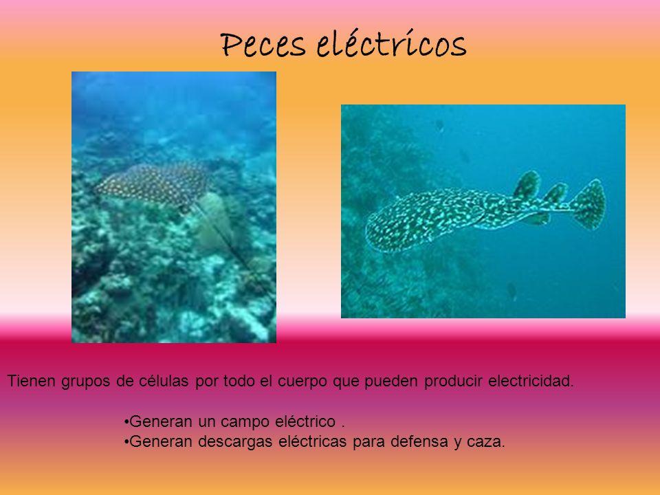 Peces eléctricos Tienen grupos de células por todo el cuerpo que pueden producir electricidad. Generan un campo eléctrico .