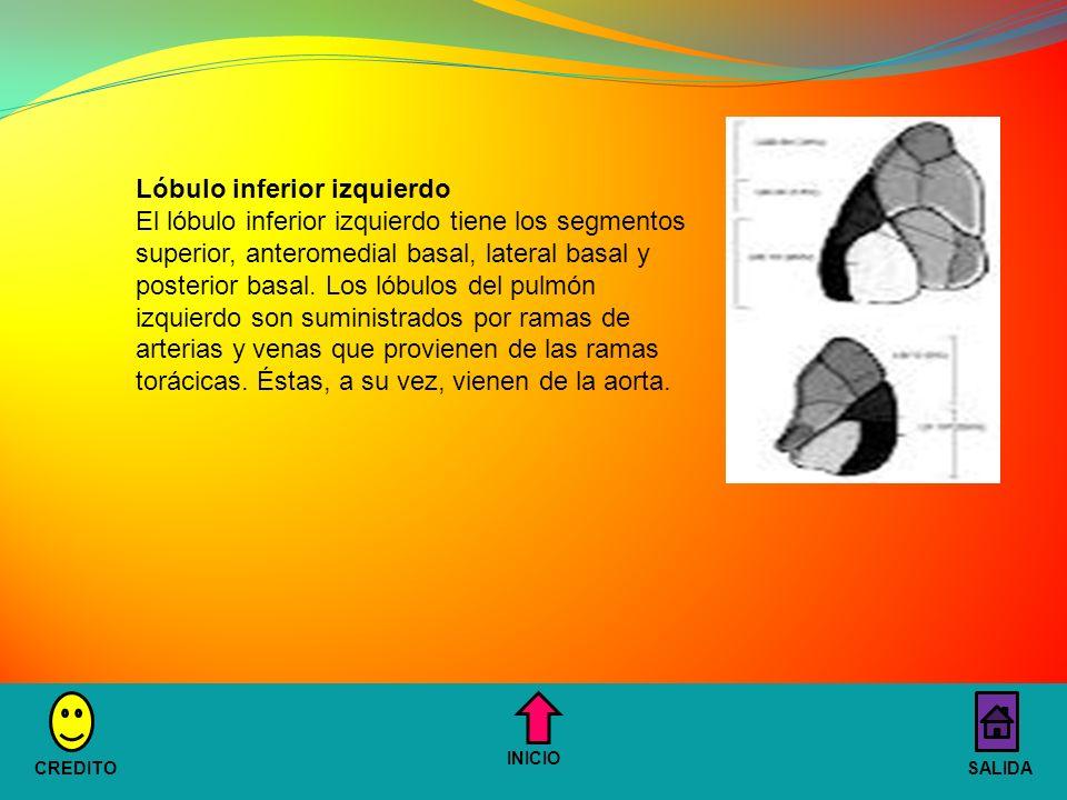 Lóbulo inferior izquierdo