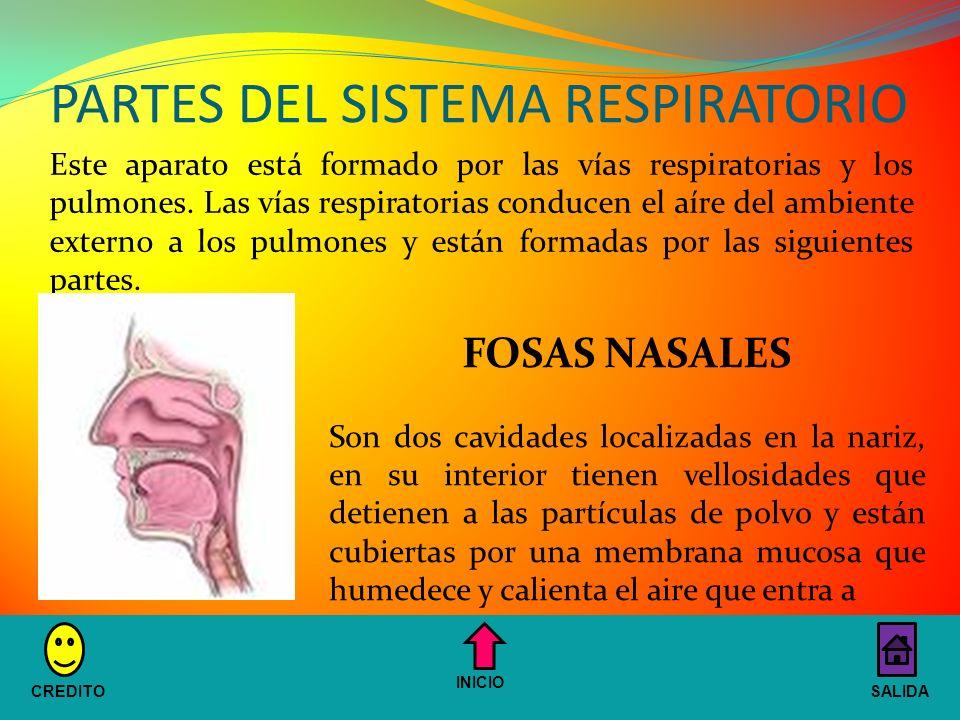 PARTES DEL SISTEMA RESPIRATORIO