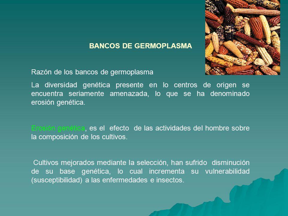 BANCOS DE GERMOPLASMA Razón de los bancos de germoplasma.