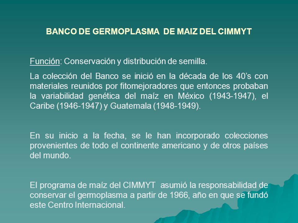 BANCO DE GERMOPLASMA DE MAIZ DEL CIMMYT