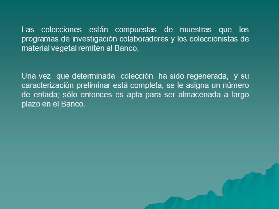 Las colecciones están compuestas de muestras que los programas de investigación colaboradores y los coleccionistas de material vegetal remiten al Banco.