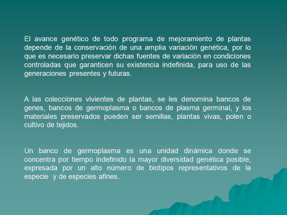 El avance genético de todo programa de mejoramiento de plantas depende de la conservación de una amplia variación genética, por lo que es necesario preservar dichas fuentes de variación en condiciones controladas que garanticen su existencia indefinida, para uso de las generaciones presentes y futuras.