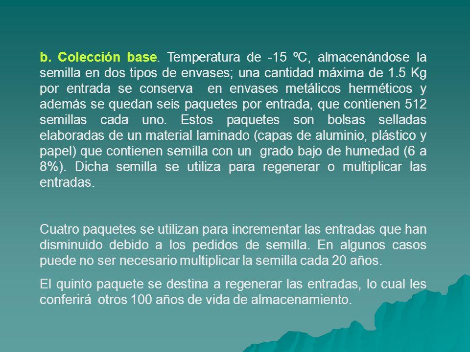 b. Colección base. Temperatura de -15 ºC, almacenándose la semilla en dos tipos de envases; una cantidad máxima de 1.5 Kg por entrada se conserva en envases metálicos herméticos y además se quedan seis paquetes por entrada, que contienen 512 semillas cada uno. Estos paquetes son bolsas selladas elaboradas de un material laminado (capas de aluminio, plástico y papel) que contienen semilla con un grado bajo de humedad (6 a 8%). Dicha semilla se utiliza para regenerar o multiplicar las entradas.