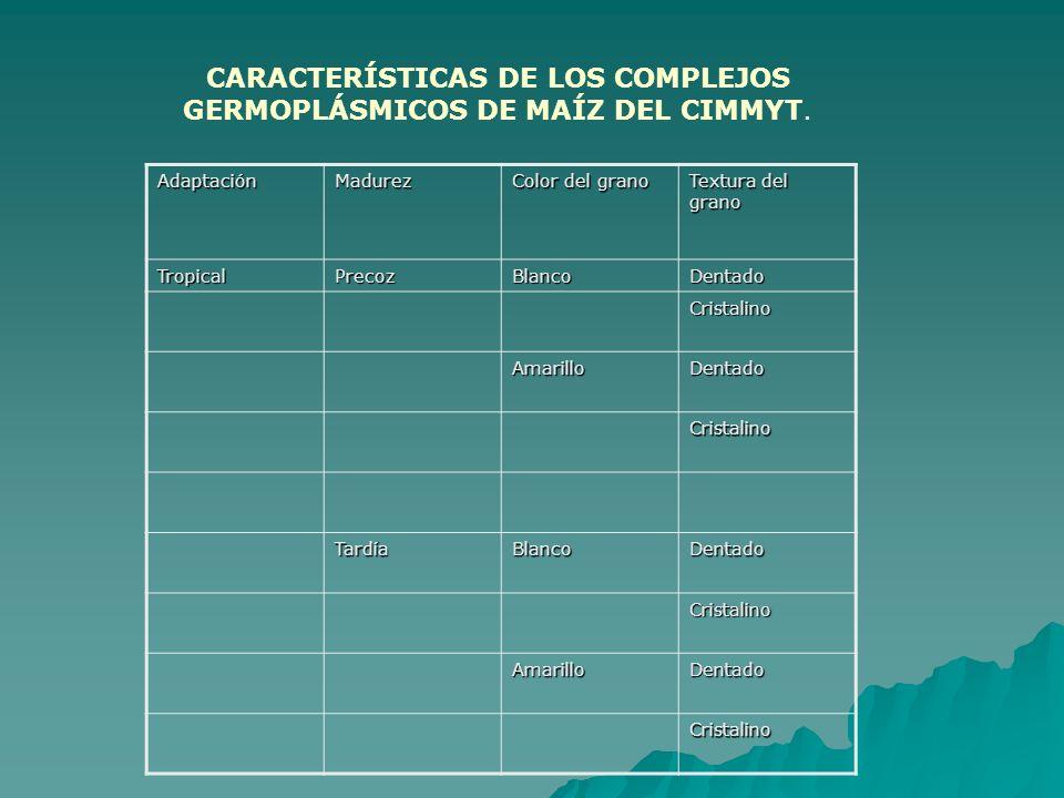 CARACTERÍSTICAS DE LOS COMPLEJOS GERMOPLÁSMICOS DE MAÍZ DEL CIMMYT.