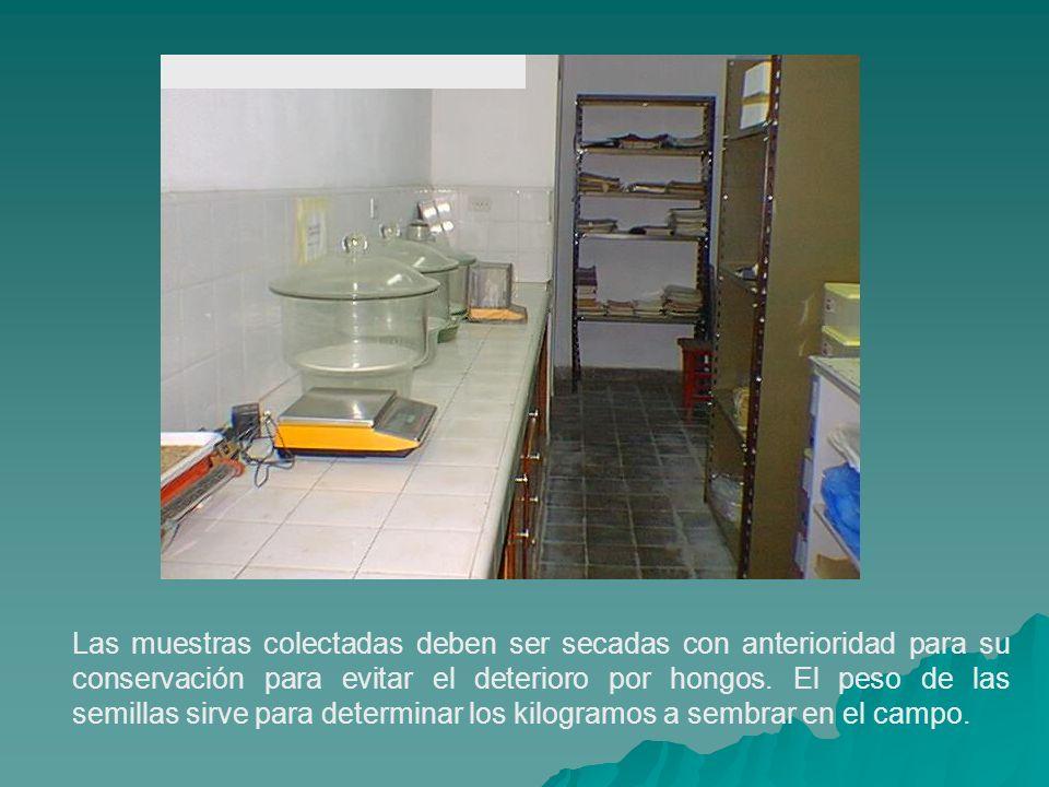 Las muestras colectadas deben ser secadas con anterioridad para su conservación para evitar el deterioro por hongos.