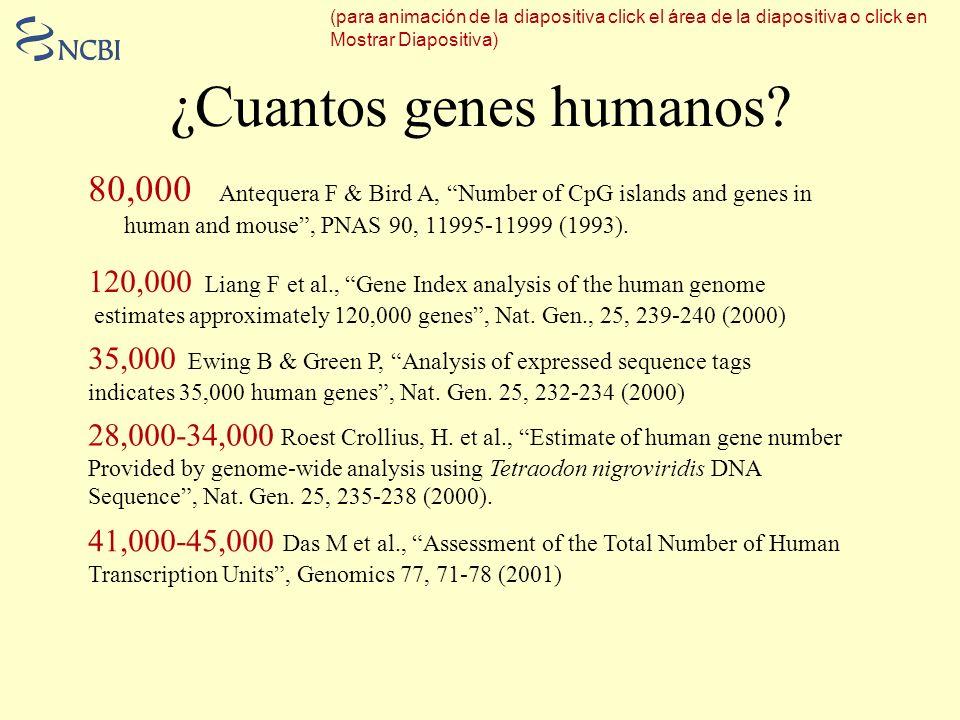 ¿Cuantos genes humanos