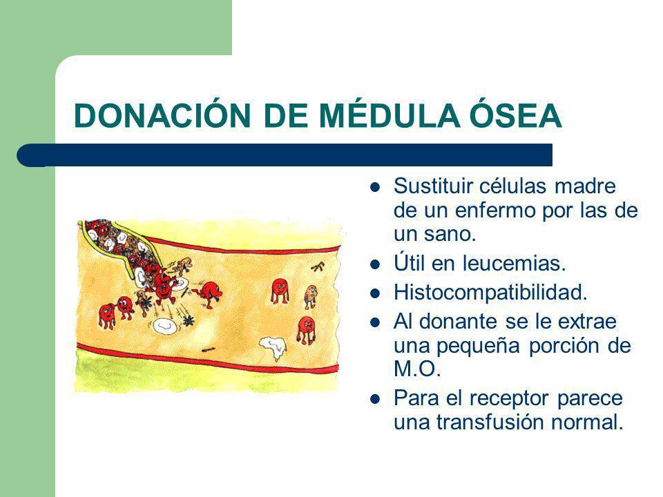DONACIÓN DE MÉDULA ÓSEA