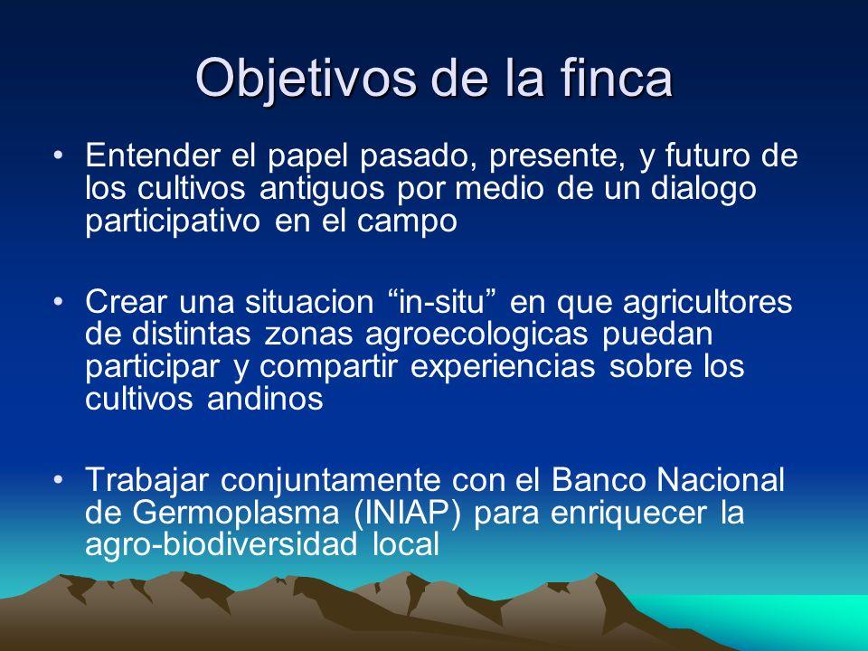 Objetivos de la finca Entender el papel pasado, presente, y futuro de los cultivos antiguos por medio de un dialogo participativo en el campo.