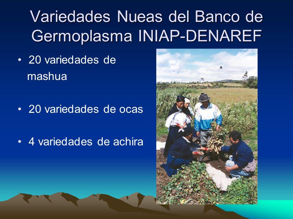 Variedades Nueas del Banco de Germoplasma INIAP-DENAREF