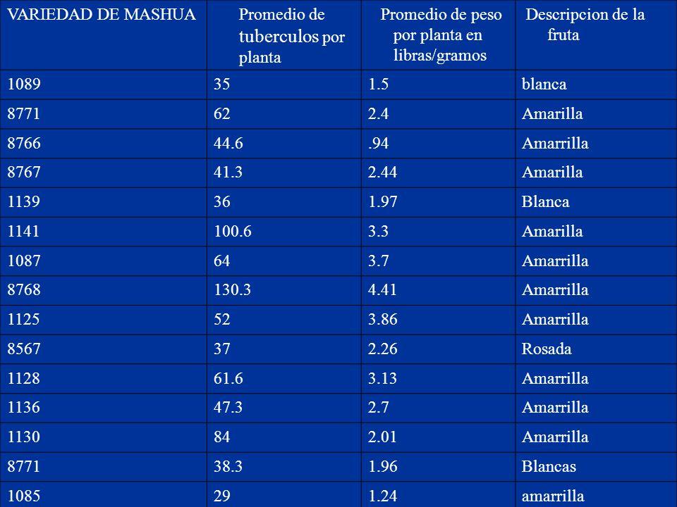 VARIEDAD DE MASHUA Promedio de tuberculos por planta. Promedio de peso por planta en libras/gramos.