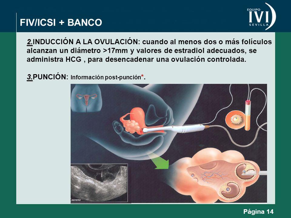 FIV/ICSI + BANCO2.INDUCCIÓN A LA OVULACIÓN: cuando al menos dos o más folículos. alcanzan un diámetro >17mm y valores de estradiol adecuados, se.