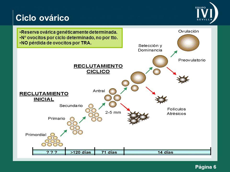 Ciclo ovárico Reserva ovárica genéticamente determinada.