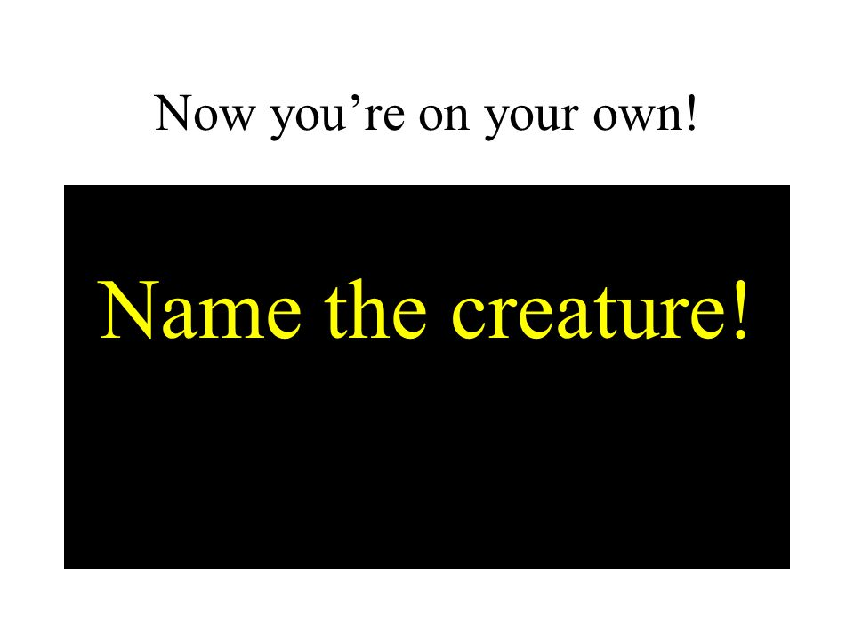 Now you're on your own! Name the creature!