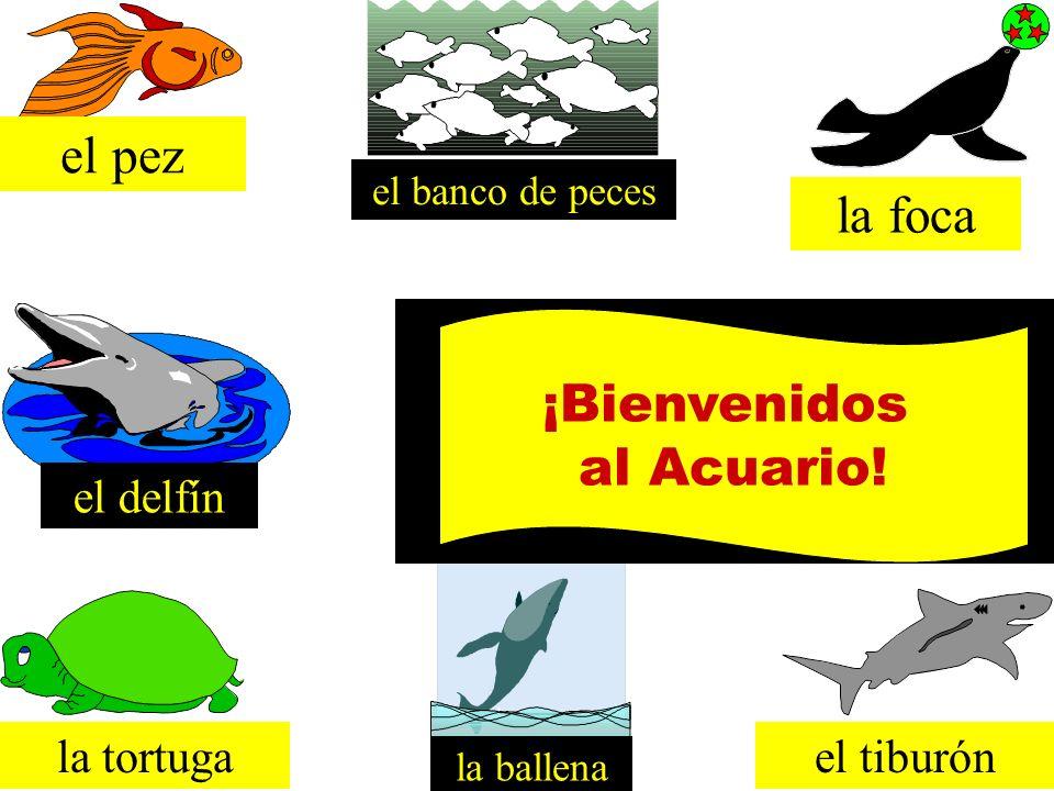 el pez la foca ¡Bienvenidos al Acuario! el delfín la tortuga