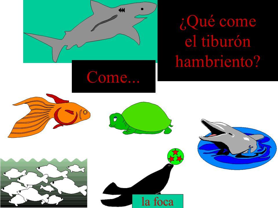 ¿Qué come el tiburón hambriento Come... la foca