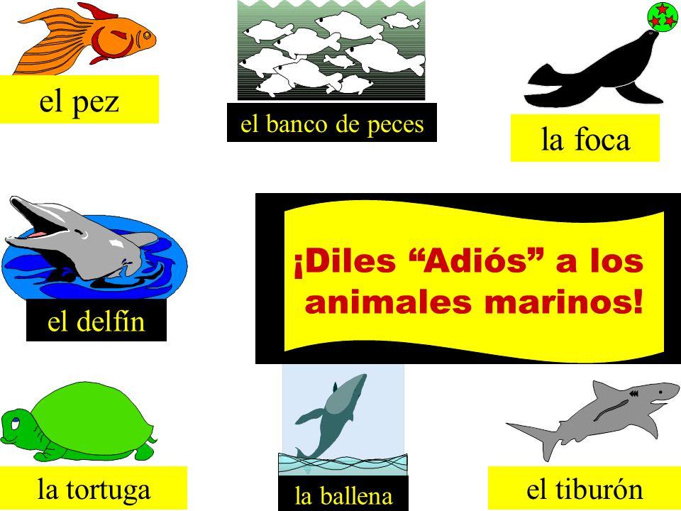 el pez la foca ¡Diles Adiós a los animales marinos! el delfín
