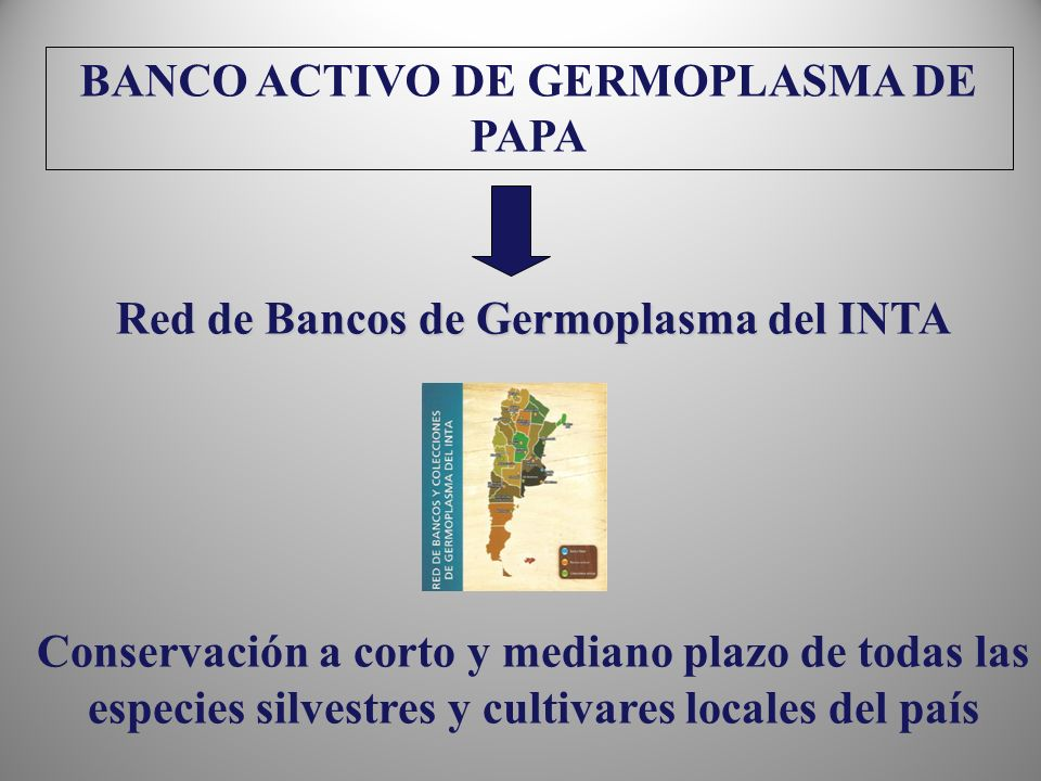 BANCO ACTIVO DE GERMOPLASMA DE PAPA