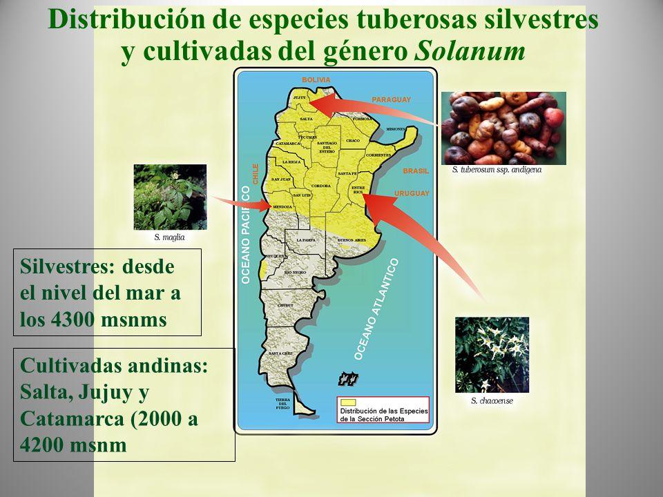 Distribución de especies tuberosas silvestres y cultivadas del género Solanum