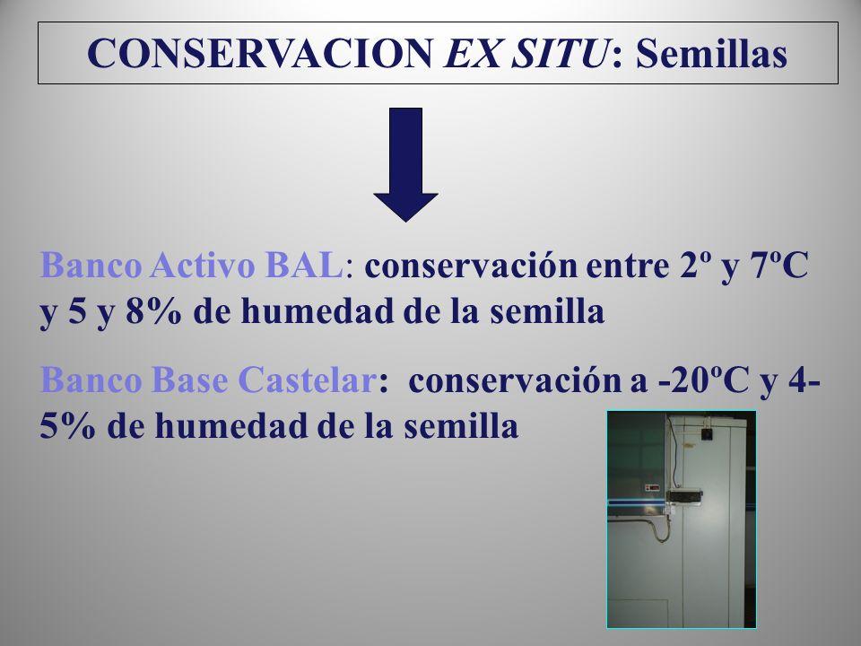 CONSERVACION EX SITU: Semillas
