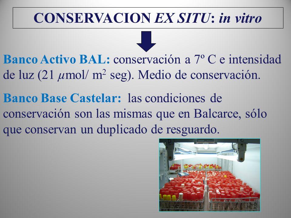 CONSERVACION EX SITU: in vitro