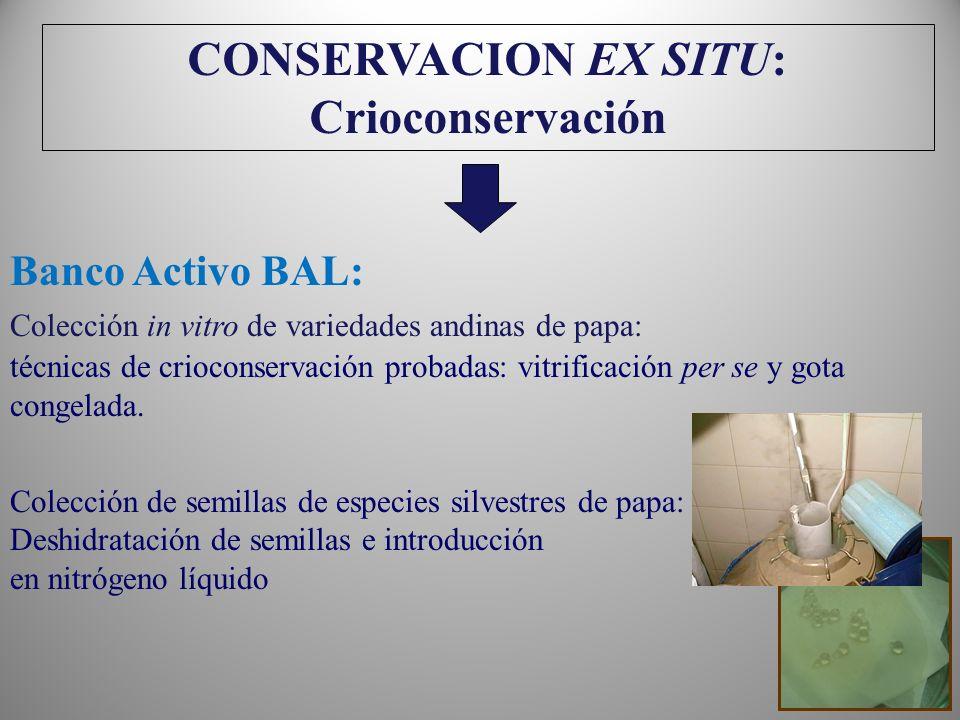 CONSERVACION EX SITU: Crioconservación