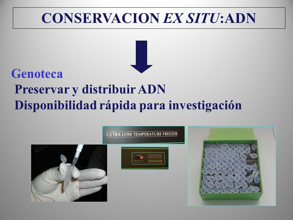 CONSERVACION EX SITU:ADN