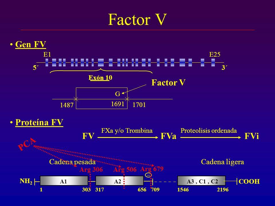 Factor V Gen FV Factor V Proteína FV FV FVa FVi PCA Cadena pesada