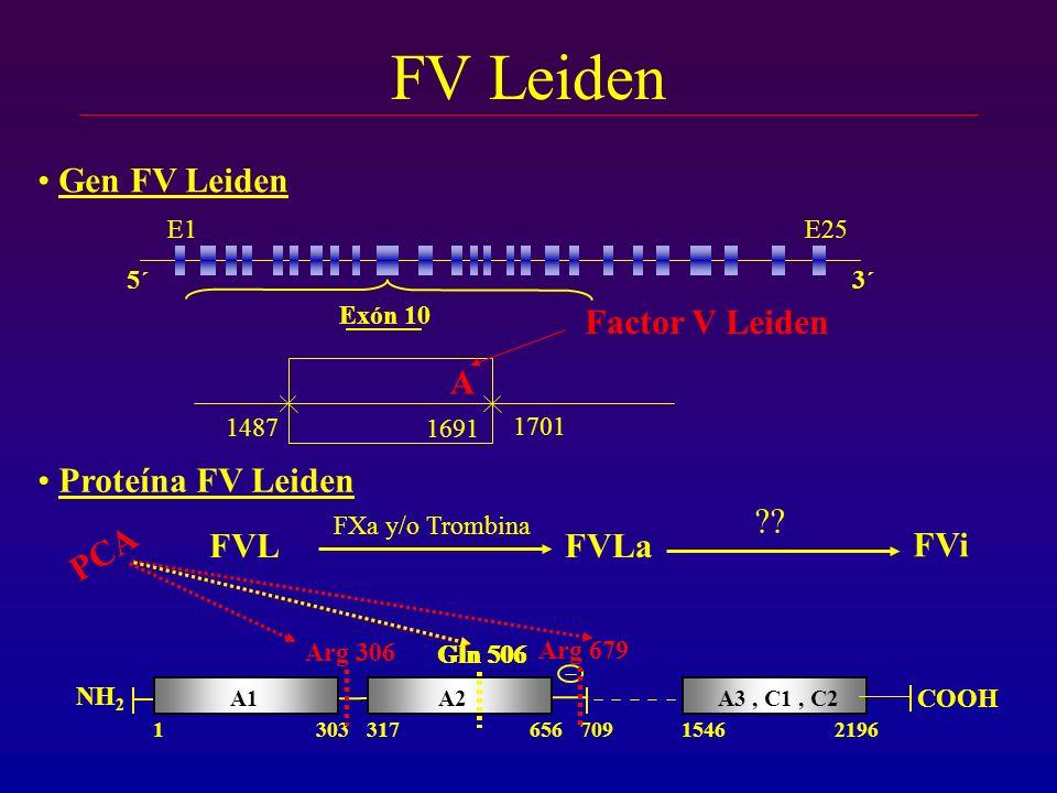 FV Leiden Gen FV Leiden A Factor V Leiden Proteína FV Leiden FVL