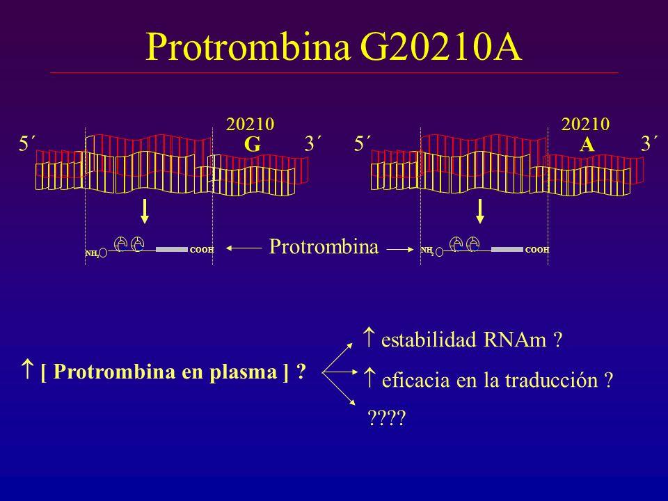 Protrombina G20210A G 5´ 3´ A 5´ 3´ Protrombina  estabilidad RNAm
