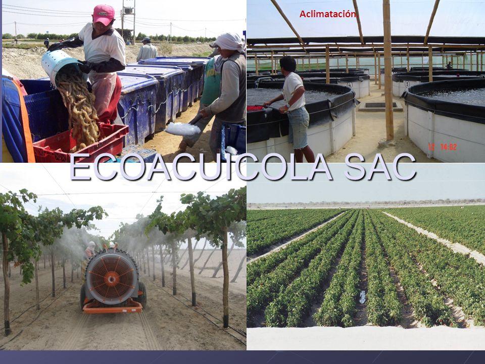 Aclimatación. Eco-Acuícola SAC. ECOACUICOLA SAC