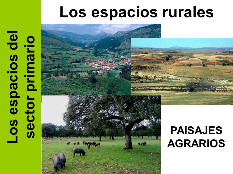 Los espacios rurales Los espacios del sector primario