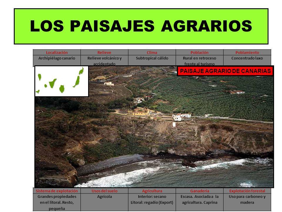 LOS PAISAJES AGRARIOS PAISAJE AGRARIO DE CANARIAS Localización Relieve